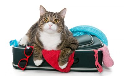 Viajar con gatos y no morir en el intento